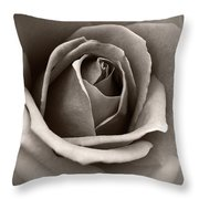 Passion Throw Pillow by Eena Bo