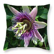Passion Flower 5 Throw Pillow