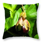 Passion Fruit 10-18-13 By Julianne Felton Throw Pillow