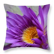 Passionate Purple Water Lily Throw Pillow