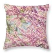 Pastel Pink Flowers Of Redbud Tree In Springtime  Throw Pillow