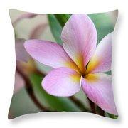 Pastel Pink Plumeria Throw Pillow