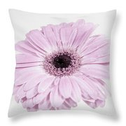 Pastel Purple Gerbera Throw Pillow