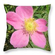 Pasture Rose Rosa Carolina Throw Pillow