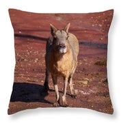 Patagonian Mara Throw Pillow