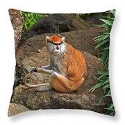 Patas Monkey Throw Pillow