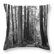 Pathway Through The Trees Throw Pillow