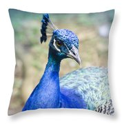 Pavo Cristatus II Indian Blue Peacock Throw Pillow