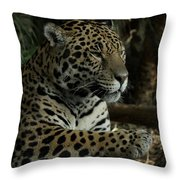 Paws Of A Jaguar Throw Pillow