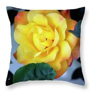 Peace Rose Palm Springs Throw Pillow