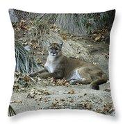 Bobcat Throw Pillow by Mae Wertz