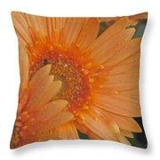 Peach Daisy Cluster Throw Pillow