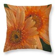 Peach Daisy Throw Pillow