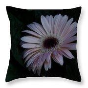 Peach Gerba Daisy  Throw Pillow