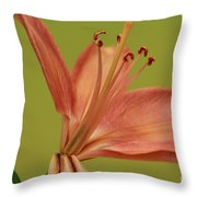 Peach Lily 4 Throw Pillow