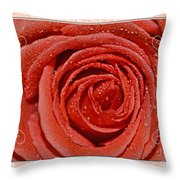 Peach Love Rose Throw Pillow