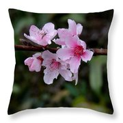 Peach Tree Blooms Miskitos Swoon Throw Pillow