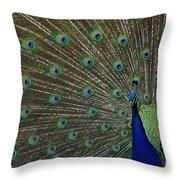 Peacock 17 Throw Pillow