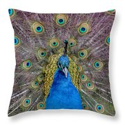 Peacock And Proud Plumage Throw Pillow