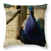 Peacock At The Fence Throw Pillow