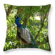 Peacock Beauty Throw Pillow by Ella Char