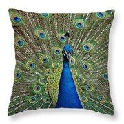 Peacock Blue Throw Pillow