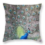 Peacock Bow Throw Pillow