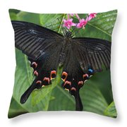 Peacock Butterfly Arizona Throw Pillow