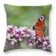 Peacock Butterfly  Inachis Io  On Buddleia Throw Pillow