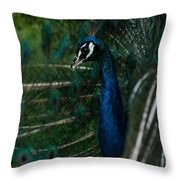 Peacock Dance Throw Pillow