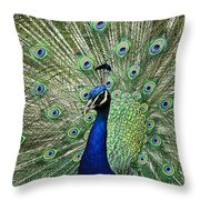 Peacock Display Throw Pillow