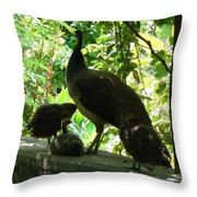 Peacock Family At Capernaum Throw Pillow