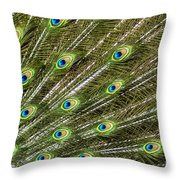 Peacock Feather Abstract Pattern Throw Pillow