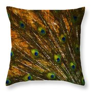 Peacock Feathers 2 Throw Pillow