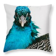 Peacock Front View Throw Pillow