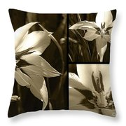 Peacock Gladiolus Triptych Throw Pillow