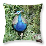 Peacock In The Brush Throw Pillow