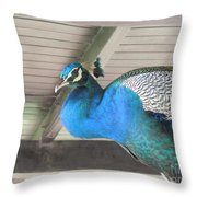 Peacock In The Rafters Throw Pillow