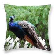 Peacock On A Rock 1 Throw Pillow