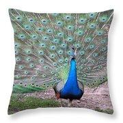 Peacock On Display Throw Pillow
