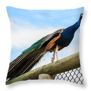 Peacock On Fence 1 Throw Pillow