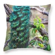 Peacock Perching On A Branch, Kanha Throw Pillow