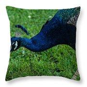 Peacock Portrait 4 Throw Pillow