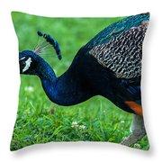 Peacock Portrait 5 Throw Pillow