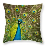 Peacock Pride Throw Pillow