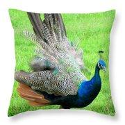 Peacock Ritual Throw Pillow