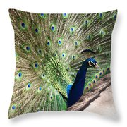 Peacock Show Throw Pillow
