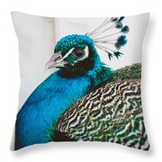 Peacock Square Throw Pillow