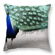 Peacock Strut Throw Pillow