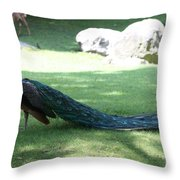 Peacock Strutting His Stuff Throw Pillow